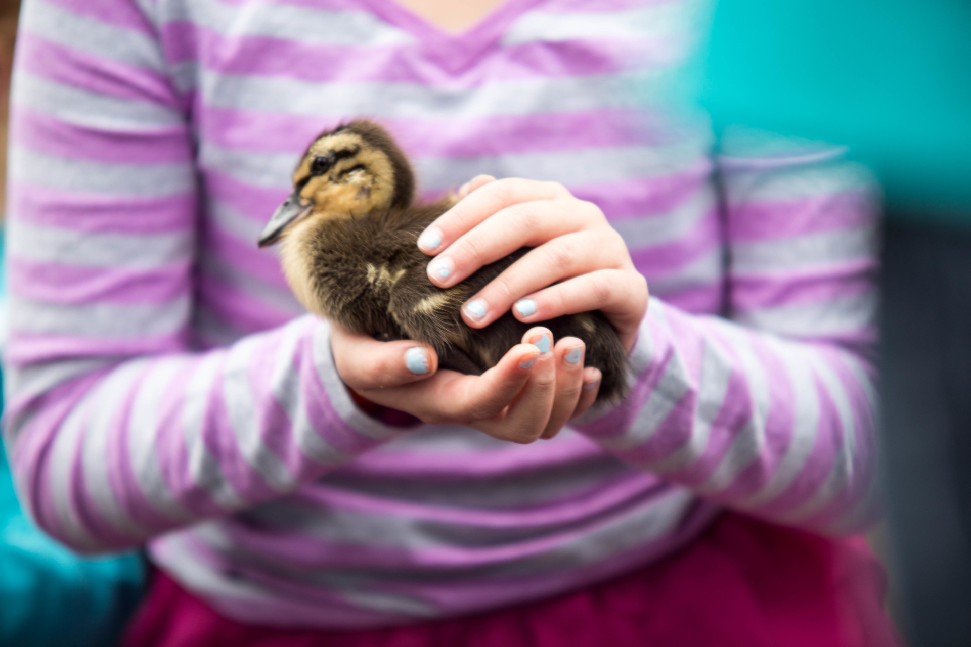 kid holding duckling